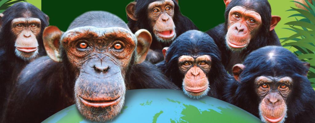 Monkey World.PNG